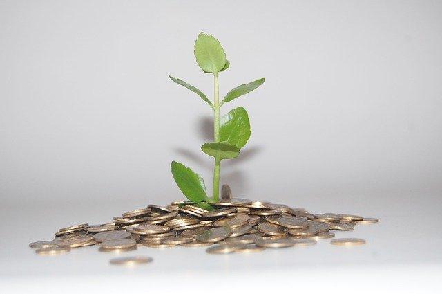 植物と小銭